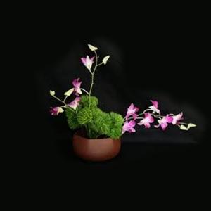 Flowers - Lola