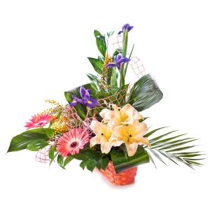 Flowers - Melissa