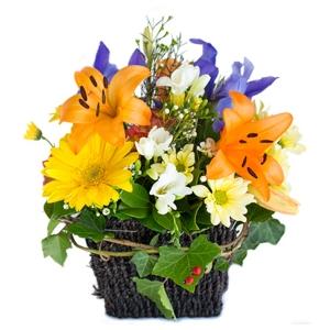 Flowers - My Lady